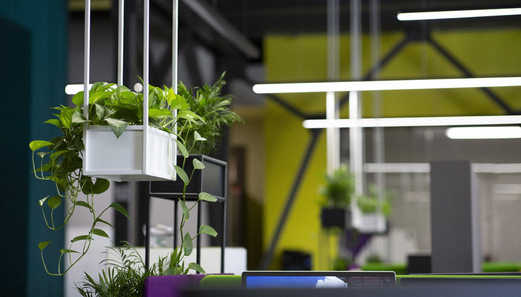 Office scene with plants