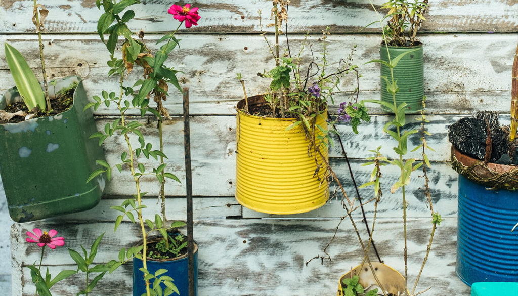 Reused tin cans for planters